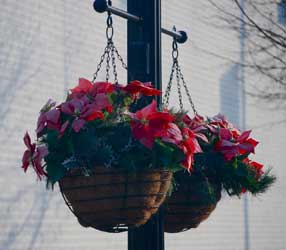 Hanging Baskets in the Streets of Hatboro, Montgomery County, PA